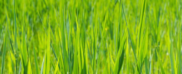 Hintergrund für Kopierraum mit Nahaufnahme von grünem Gras – Foto