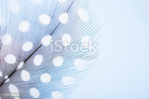 istock Background for design with soft colorfull feathers with space for text 1127266031