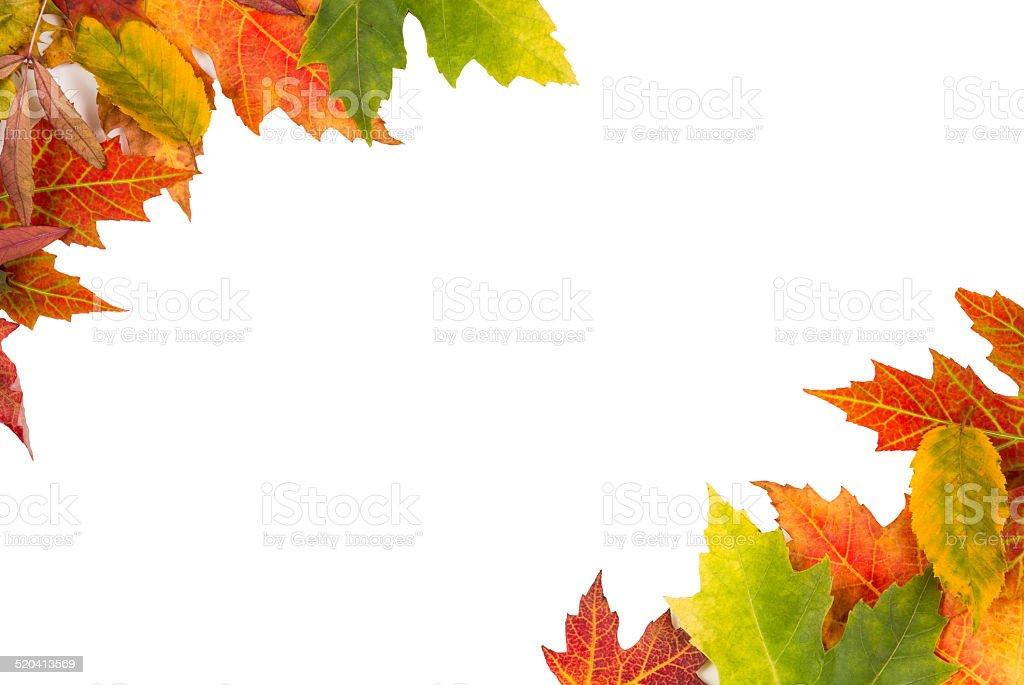 Background frame isolated colorful autumn leaves wedding party i stock photo