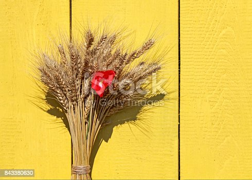 istock background from a bunch of ripe Golden ears of corn and red poppy on a wooden yellow painted wall 843380630