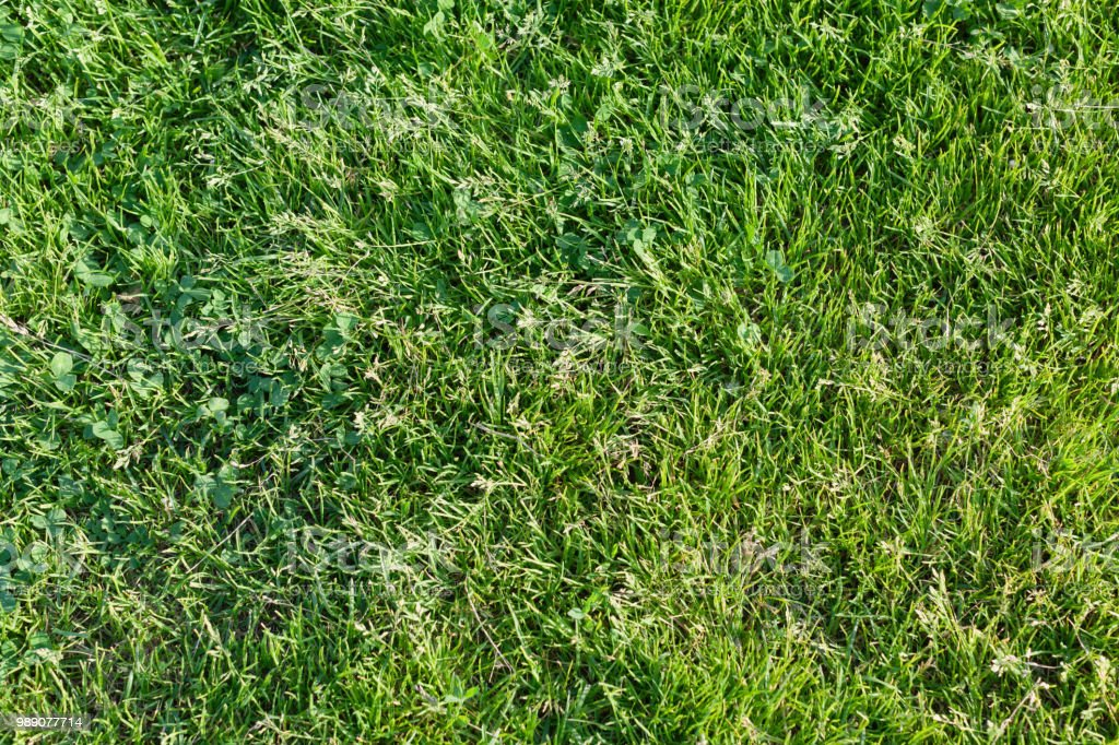 Background from a fresh juicy bright green grass стоковое фото