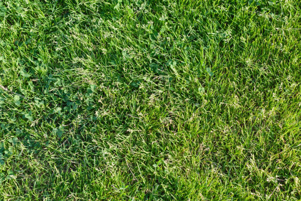 Cтоковое фото Background from a fresh juicy bright green grass