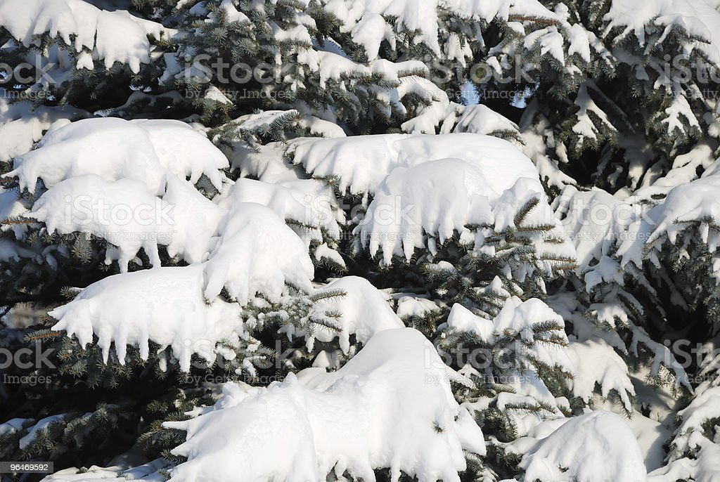 Background from a fur-tree covered with snow royalty-free stock photo