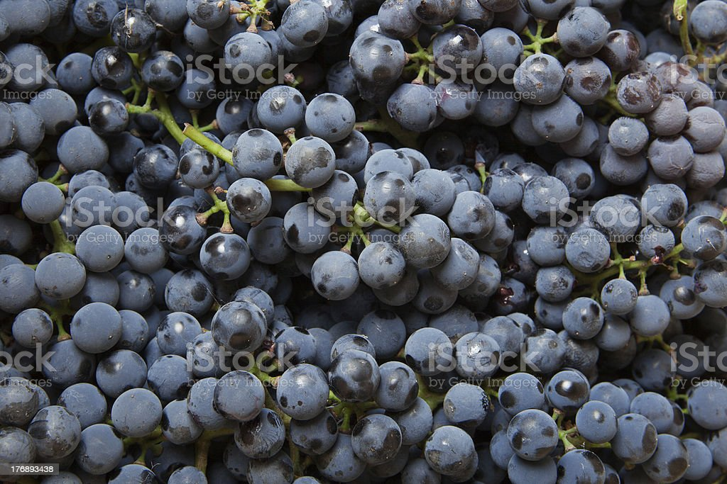 background from blue grape royalty-free stock photo