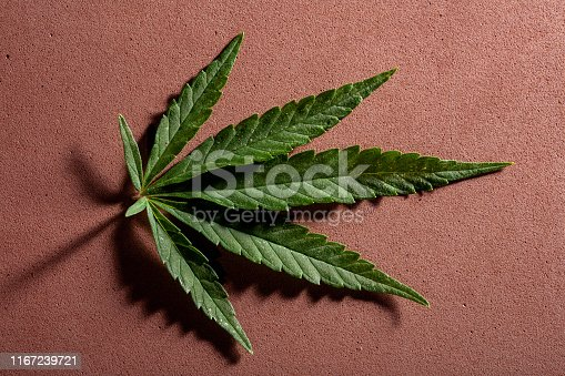 936410150 istock photo Background from cannabis drug leaves. 1167239721