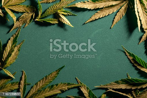 936410150istockphoto Background from cannabis drug leaves. 1167239832