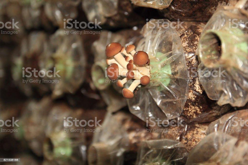background from cultivate mushrooms Lizenzfreies stock-foto