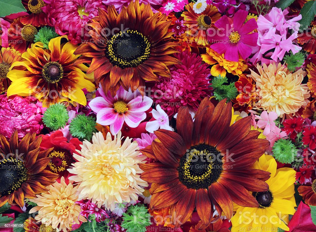 Background from cultivated flowers. Beautiful floral background. foto stock royalty-free