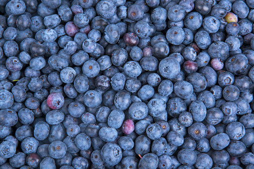 533340696 istock photo Background from freshly picked blueberries 1001622062