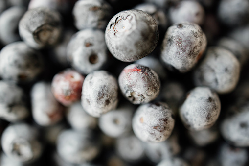 533340696 istock photo Background from freshly picked blueberries 1258106863