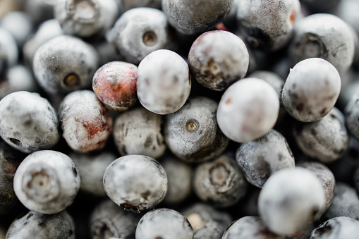533340696 istock photo Background from freshly picked blueberries 1258106880