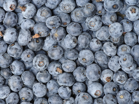 533340696 istock photo Background from freshly picked blueberries 655611018