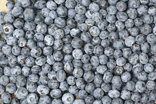 533340696 istock photo Background from freshly picked blueberries 655662482