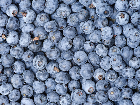 533340696 istock photo Background from freshly picked blueberries 681860528