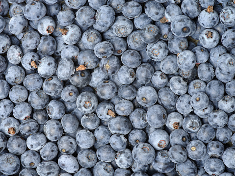 533340696 istock photo Background from freshly picked blueberries 685886114