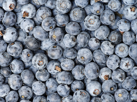 533340696 istock photo Background from freshly picked blueberries 688337876
