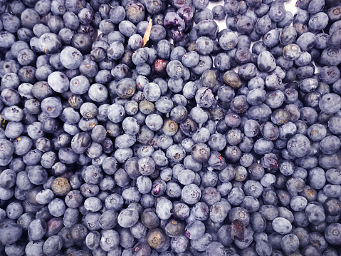 533340696 istock photo Background from freshly picked blueberries 831440094