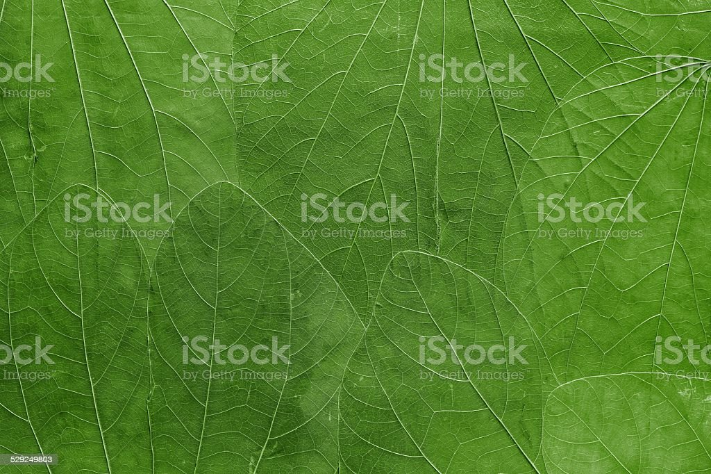background from leaves of bright green color stock photo