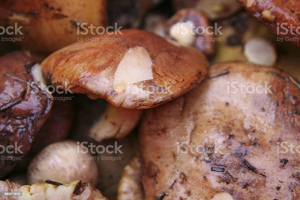Background from mushrooms royalty free stockfoto