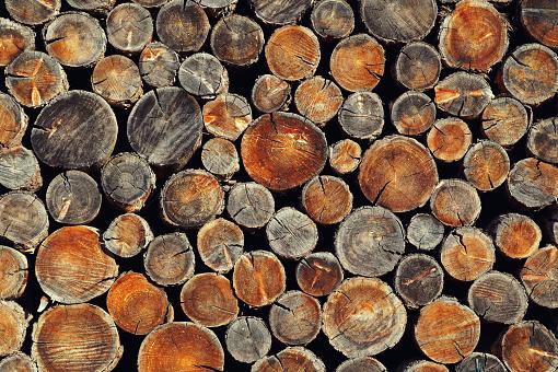 Background From Old Wooden Disks Stockfoto und mehr Bilder von Baum