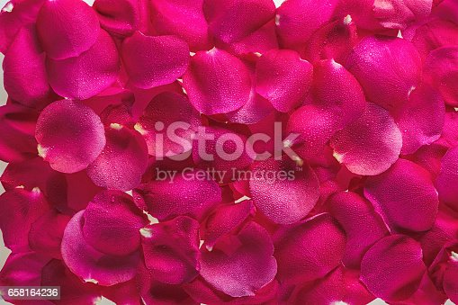 istock Background from petals of magnificent fresh roses with dew drops 658164236