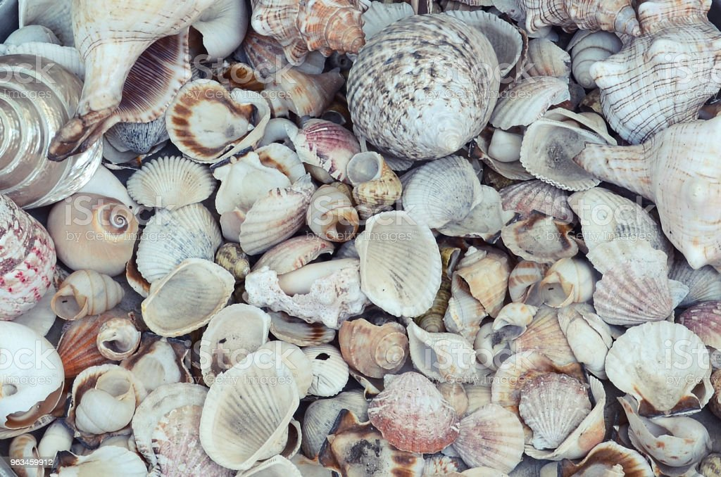 Background from placer small and medium sea shells, evenly covering the surface stock photo