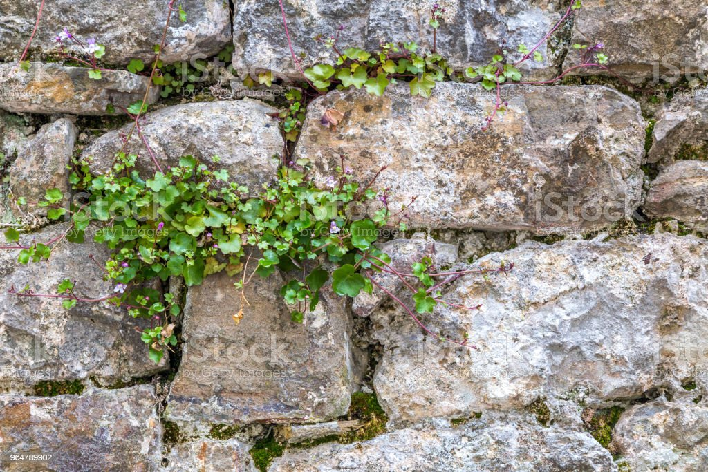 Background from the outer stone wall. royalty-free stock photo