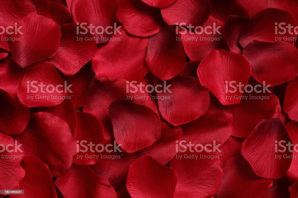 A background full of red rose petals stock photo
