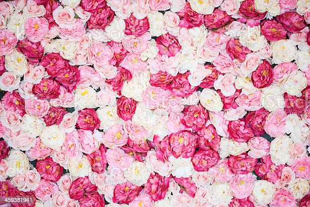 Background full of white and pink peonies picture id459381941?b=1&k=6&m=459381941&s=612x612&h=rtqdw7u t0kysgydfwf9l hu6tgykbhu8zxzosvlui8=