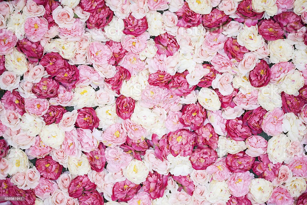 background full of white and pink peonies stock photo