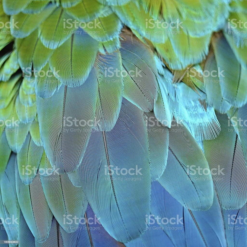 Background graphic of Harlequin Macaw feathers stock photo