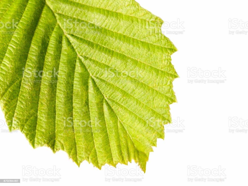 Background green leaf macro stock photo