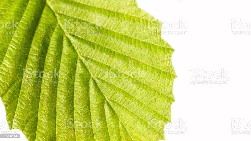Background green leaf stock photo