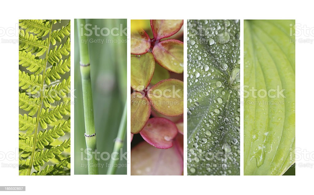 Background green nature stock photo