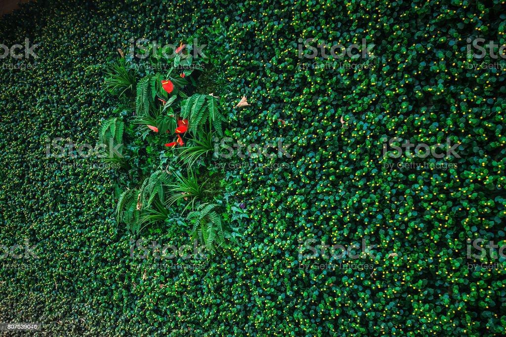 Grüne Wand Hintergrunddekoration für ECO Konzept Holzhaus – Foto