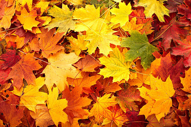 Hintergrund Gruppe Herbst orange verlässt. – Foto