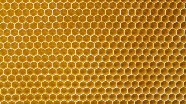 background image. bees honeycombs from wax from the hive. copy space - ape domestica foto e immagini stock