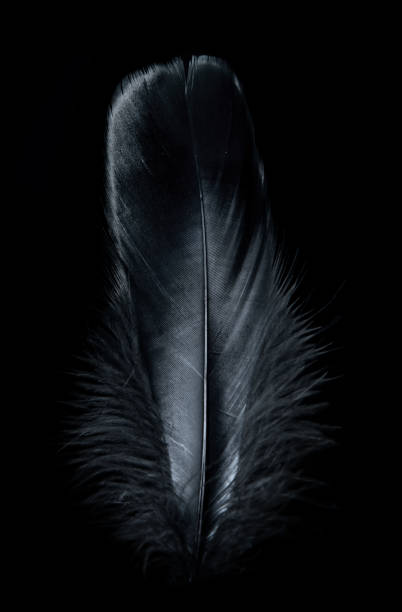 Background Image of a black feather stock photo