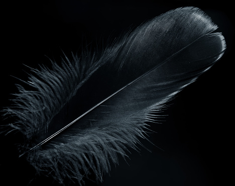 Background Image of a black feather