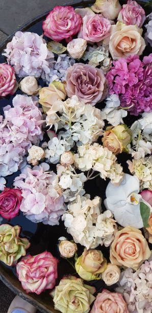 Background image of roses colored fresh pastel roses picture id1164169260?b=1&k=6&m=1164169260&s=612x612&w=0&h=pxjkjwuxx7mkeypli  v0q4kqwa upqgekf6uqyud a=