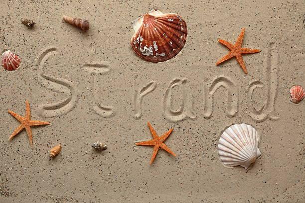 background image with shells and starfish - kalifornien ostsee stock-fotos und bilder