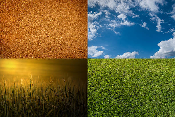 background into 4 - grain, sand, sky, grass stock photo
