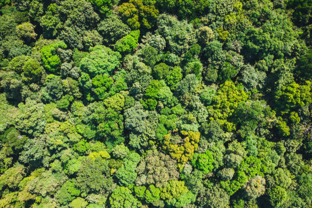 background is green from jungle or rainforest. Aerial top view forest, Texture forest view from above. stock photo