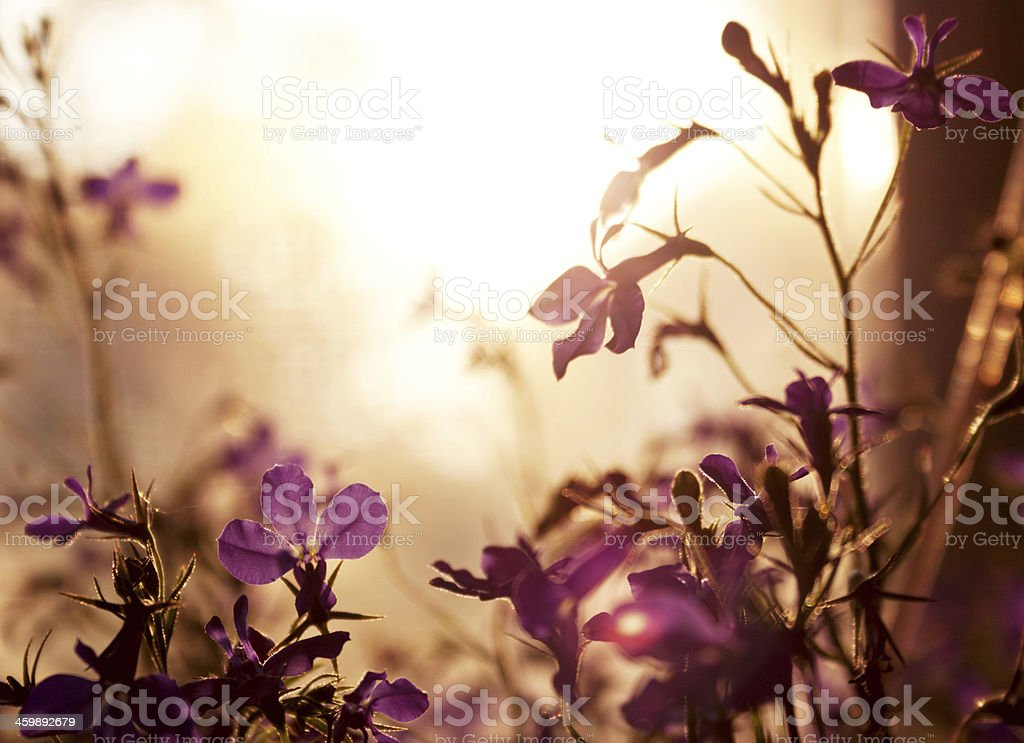 Background made by violet wildflower stock photo