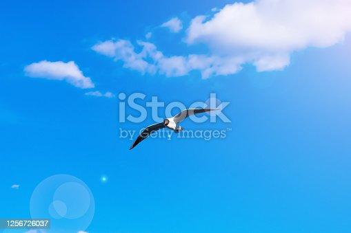 Creative layout with a copy space. Background made of bright blue sky, white clouds  and a flying seagull