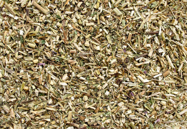 Background made of dried echinacea herb stock photo