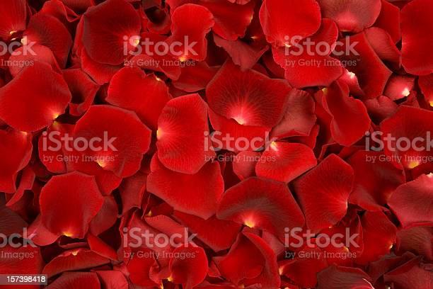 Background made of solely red rose petals picture id157398418?b=1&k=6&m=157398418&s=612x612&h=t46gbmaxtb3lpfxbeavyezayje4doygf3gnsixyrndm=