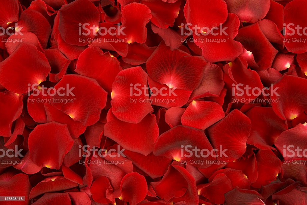 Background made of solely red rose petals stock photo