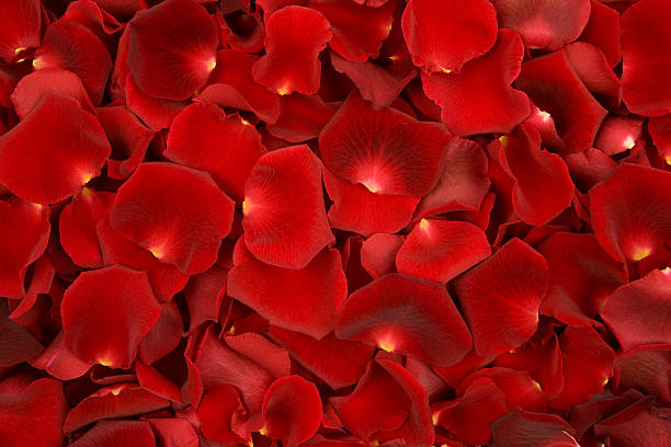 background made of solely red rose petals - rose petals stock pictures, royalty-free photos & images