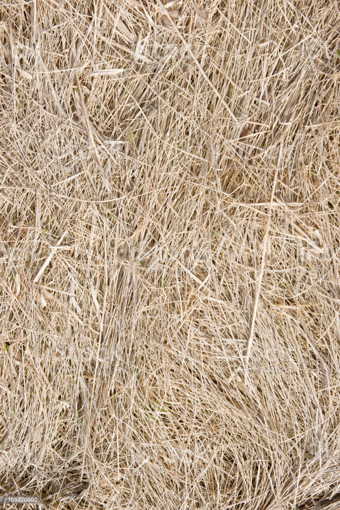 Background Nature Brown Grass royalty-free stock photo